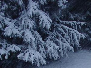 Foto: Unser Wald, wohl die größte und wichtigste Klimaanlage